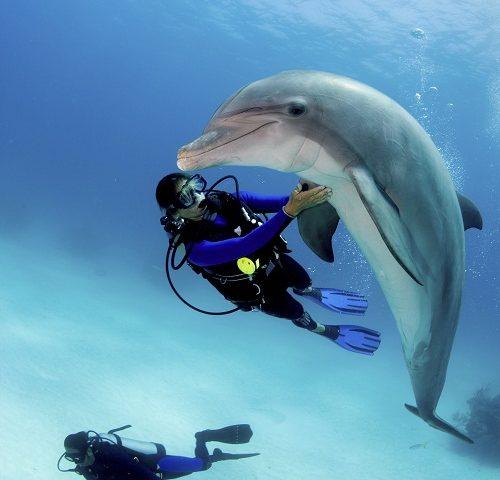 une rencontre avec les dauphins sur la Côte d'Azur